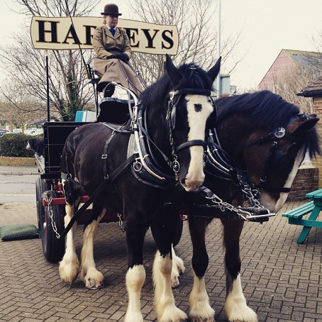 Harveys Dray