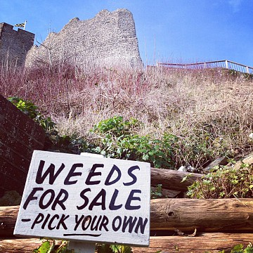 Weeds for sale 130:132